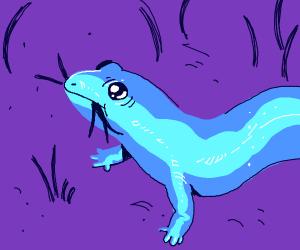 Blue salamander eating grass