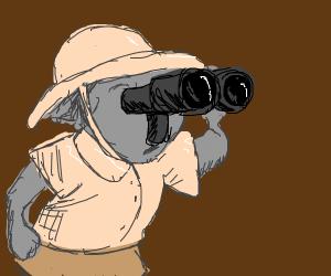 Koala explorer
