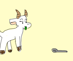 Goat unimpressed by spoon