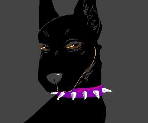 doberman with a spiky collar