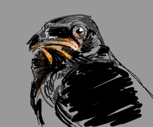 Angsty crow