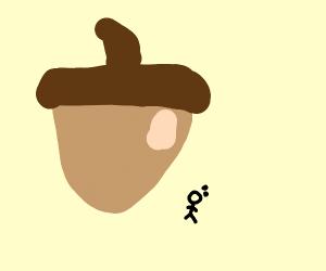 What a big acorn