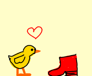 chicken looks at a shoe