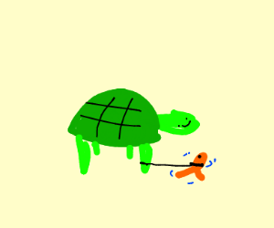 turtle gets a pet fish