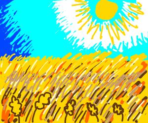 Sun over wheatfields