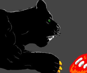 black cats feeding on flesh
