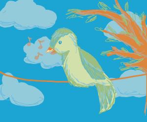 bird singing on a wire