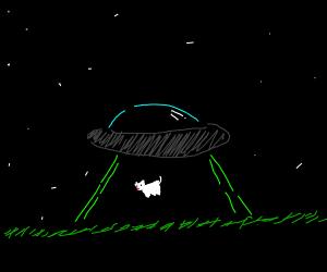 Alien abduction at 4am