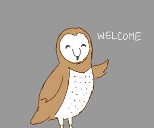 Barn owl greeting you