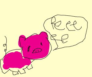 Pig going reeee