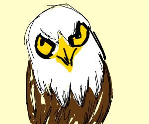Eagle with an owl face