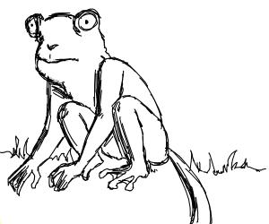 Frog-monkey exotic hybrid