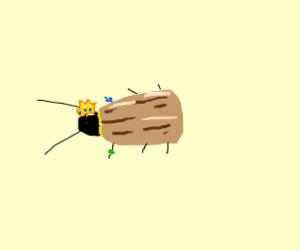 Fancy Cockroach