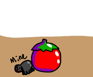 Spider protec tomato