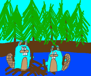 blue beavers build a dam
