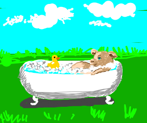 Cute little pig in bathtub
