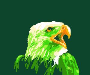 Glorious eagle