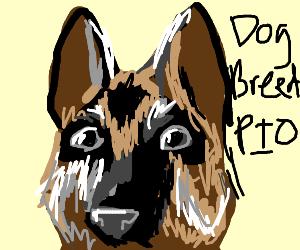 Dog breed(?) PIO