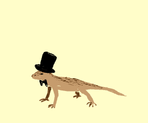 classy lizard