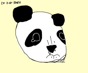 Saddest Panda in Existence