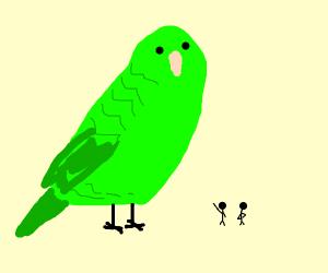 Giant Parakeet