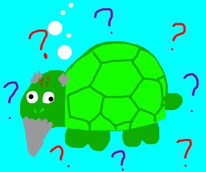 senile turtle is confused