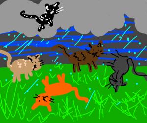 Its Raining cats hallelujah