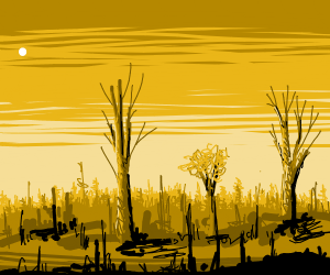 lovely sunset behind forest