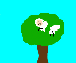 A sheep stuck in a tree