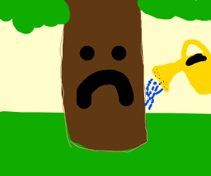 watering sad tree