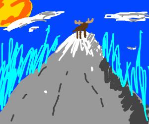 moose on a mountain