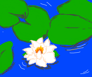white flower floating in water