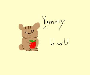 Hamster eating a strawberry UwU