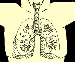 Lungs?