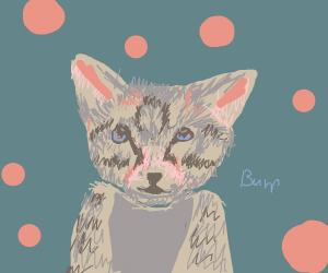 Kitten bleps