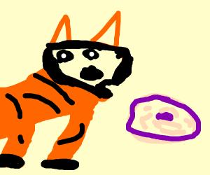 foxy likes doughnuts
