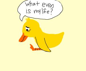 Duckling contemplates existance