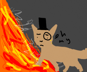 Gentleman cat steps into lava