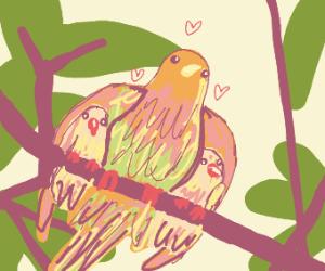 Bird loves her chicks
