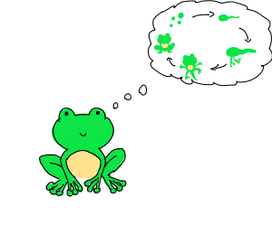 frog thinking of the life cycle of a frog
