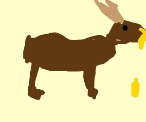 Elk eating Mustard