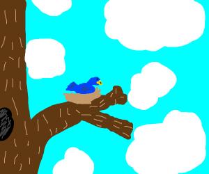 Bird in it's nest