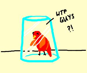 Bird in Glas