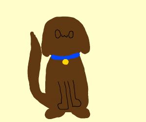 Doggo 0w0