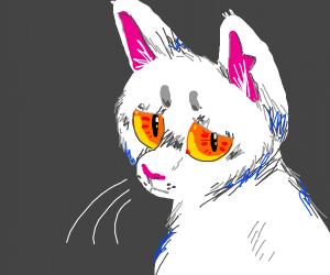 orange eyed kitty looks sad af