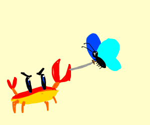 A butterfly attacking a crab