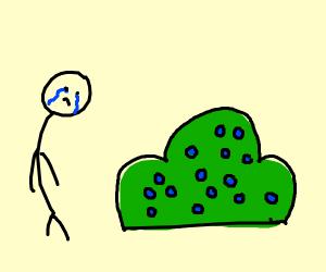 a man sad to see a blueberry bush
