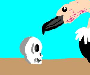 Vulture looking at skull