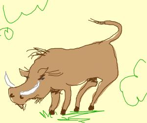 wild boar/ hairy warthog