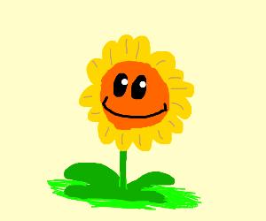 happy flower in the sun